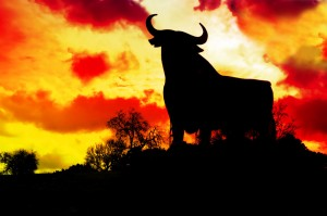 Spanish Bull Andalucia