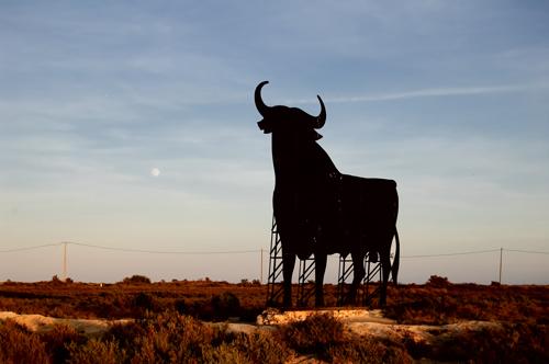 The osborne bull